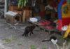 Gatti oasi Villa Curia_2