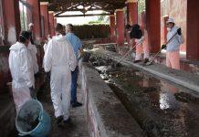 lavatoio cibali Catania