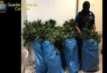 piantagione illecita di cannabis a belpasso